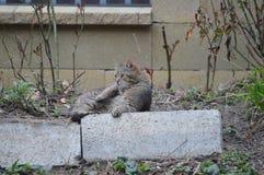 Katze, die im Garten liing ist stockbild
