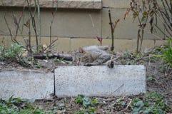 Katze, die im Garten liing ist lizenzfreies stockbild
