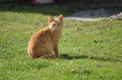 Katze, die im Garten sitzt und beobachtet stockfotos