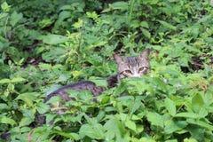 Katze, die im Laub sich versteckt Lizenzfreie Stockfotografie