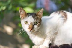 Katze, die im Licht badet Stockbilder