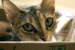 Katze, die im Papierkasten, neugieriges Kätzchen im Kasten sich versteckt Eine Katze spielt Verstecken in einer Pappschachtel Ein stockbilder