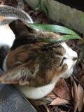 Katze, die im Schatten döst Lizenzfreie Stockfotografie