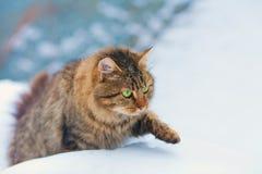 Katze, die im Schnee aufweckt Stockfoto