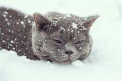 Katze, die im Schnee liegt Lizenzfreies Stockbild