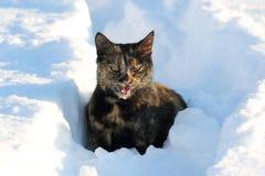 Katze, die im Schnee miaut Lizenzfreie Stockbilder