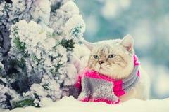 Katze, die im Schnee nahe Tannenbaum sitzt lizenzfreie stockfotografie