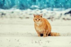 Katze, die im Schnee sitzt Stockfoto