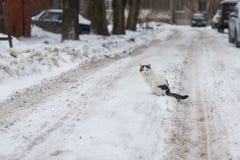Katze, die im Schnee sitzt Lizenzfreie Stockfotos