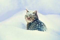 Katze, die im Schnee stationiert Lizenzfreies Stockfoto