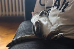 Katze, die im Sofa schläft lizenzfreies stockfoto
