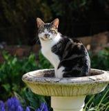 Katze, die im Vogelbad sitzt Lizenzfreies Stockfoto
