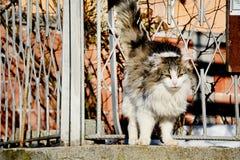 Katze, die im Zaun verkratzt Stockfotografie