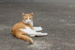 Katze, die Kamera betrachtet Stockfotos