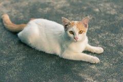 Katze, die Kamera betrachtet Lizenzfreie Stockfotos