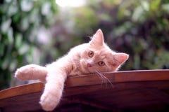 Katze, die Kamera betrachtet Lizenzfreie Stockbilder