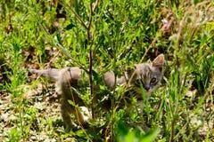 Katze, die Kamera durch Gras betrachtet Stockfotografie