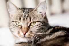 Katze, die Kamera untersucht Lizenzfreie Stockbilder
