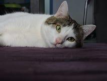 Katze, die Kamera untersucht Lizenzfreie Stockfotos