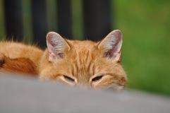 Katze, die an mir über den Schritten späht Stockbild