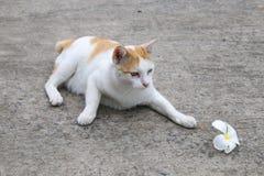 Katze, die mit Blume spielt lizenzfreies stockfoto