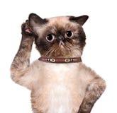 Katze, die mit dem großen Ohr hört stockfoto