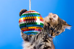 Katze, die mit Discokugel spielt Lizenzfreie Stockfotografie