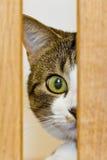 Katze, die mit einem Auge schaut Stockbild