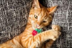Katze, die mit einem Spielzeug spielt Lizenzfreie Stockbilder