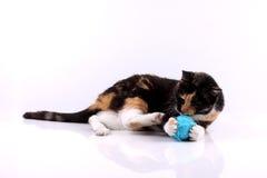Katze, die mit einer Wolle spielt Stockfotografie