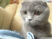 Katze, die mit großen Augen anstarrt stockfotografie
