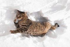 Katze, die mit Schnee spielt Stockfotos