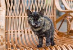 Katze, die mit Interesse schaut Stockfotos