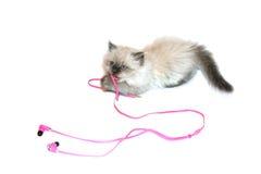Katze, die mit Kopfhörern spielt Lizenzfreies Stockbild