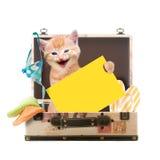 Katze, die mit Plakat in einem Koffer sitzt Stockbilder