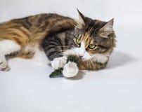 Katze, die mit Plastikkiefer spielt Stockfotos