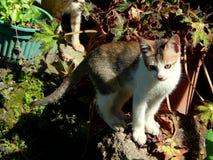 Katze, die morgens ein Sonnenbad nimmt Stockfoto
