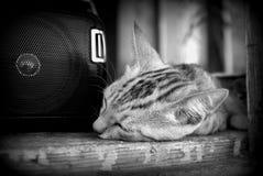 Katze, die Musik hört Stockbilder