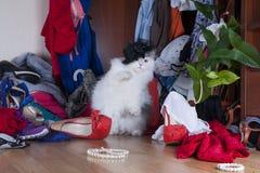 Katze, die nach Sachen in der Garderobengeliebte sucht Stockfotografie