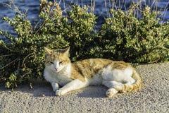 Katze, die nah an dem Meer ein Sonnenbad nimmt Stockfotos