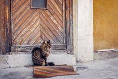 Katze, die nahe Tür auf einer alten Wolldecke sitzt Lizenzfreie Stockbilder