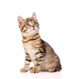 Katze, die oben auf weißem Hintergrund schaut stockfotos