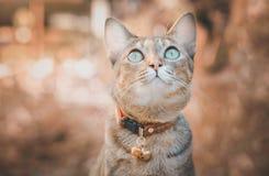 Katze, die oben dem Himmel, braunes Tonbild betrachtet lizenzfreie stockbilder