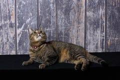 Katze, die oben den Himmel untersucht Stockfotografie