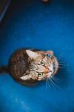 Katze, die oben schaut Stockbilder