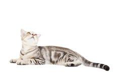 Katze, die oben schaut Lizenzfreie Stockbilder