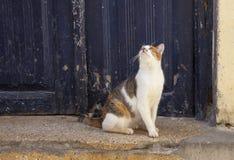 Katze, die oben schaut Stockbild