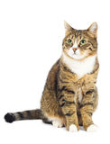 Katze, die oben schaut. Kopieren Sie Platz. Getrennt Lizenzfreies Stockfoto