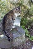 Katze, die rückwärts auf einem Felsen sitzt Lizenzfreie Stockfotos