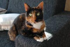 Katze, die am Rand einer Couch sitzt Stockbilder